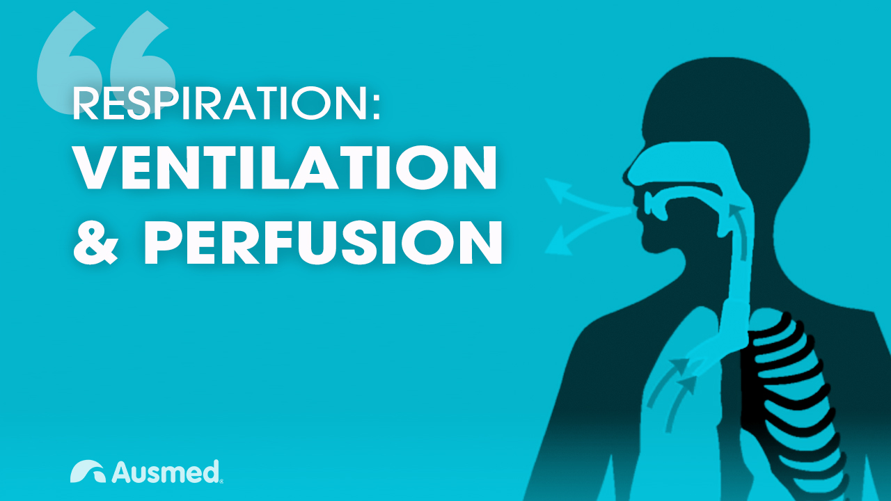 Cover image for article: Ventilation, Diffusion and Perfusion